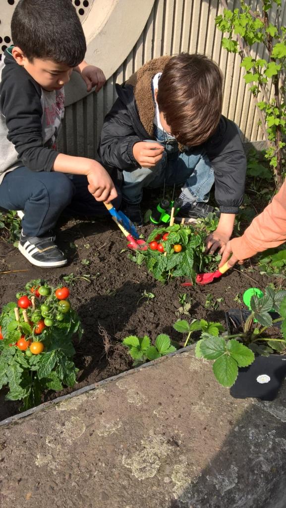 kinderen planten plantjes